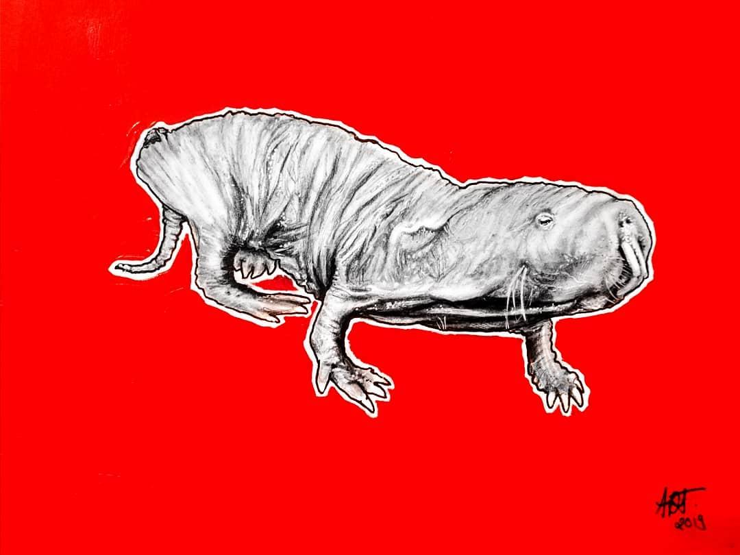 Molerat Original By Original Artwork By Adriana Artmeier