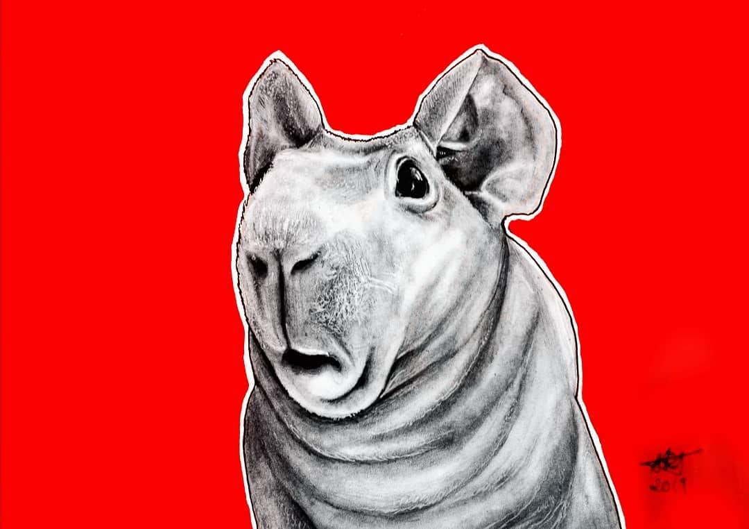 Skinny Pig Original By Original Artwork By Adriana Artmeier