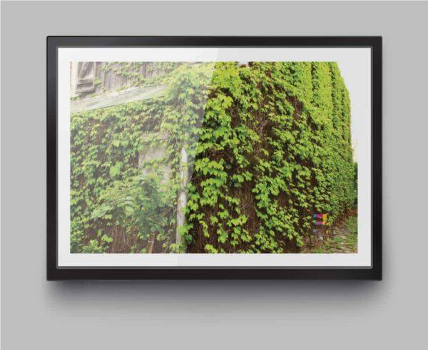a4-print-richmond-vines-by-genevieve-engelhardt-935125-genengelhardt