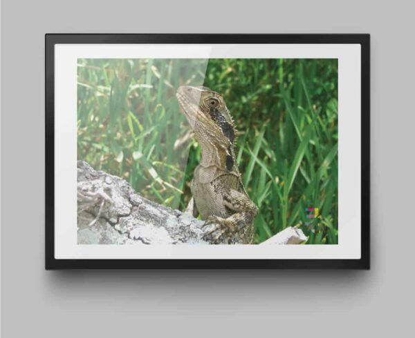 a4-print-byron-bay-lizard-by-genevieve-engelhardt-935121-genengelhardt