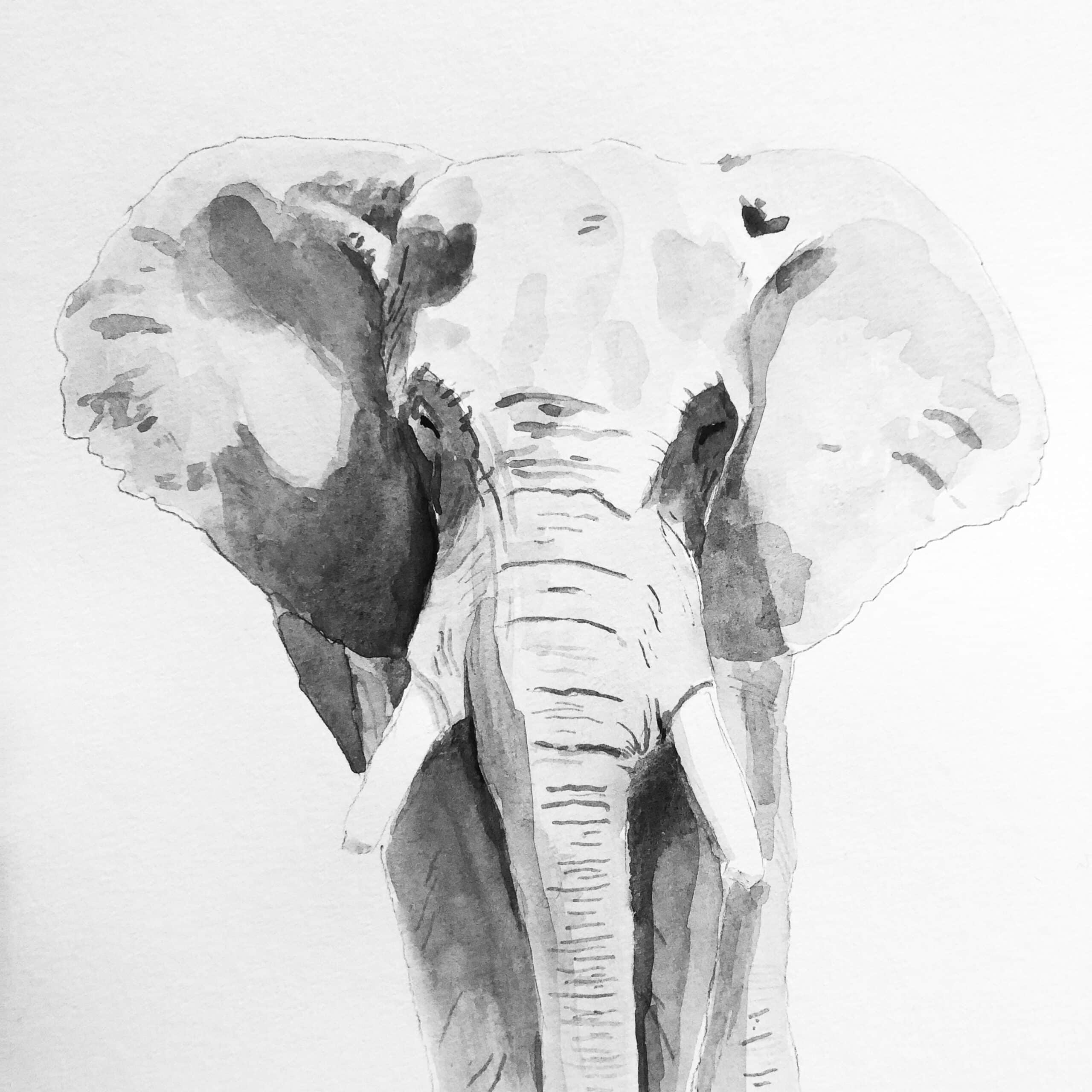 'Elephant' Watercolour Painting – By Amanda Wells Art