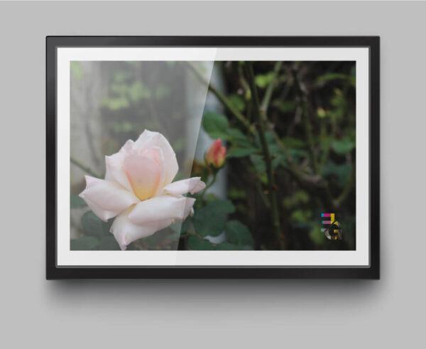 a4-print-roses-1-by-genevieve-engelhardt-935031-genengelhardt