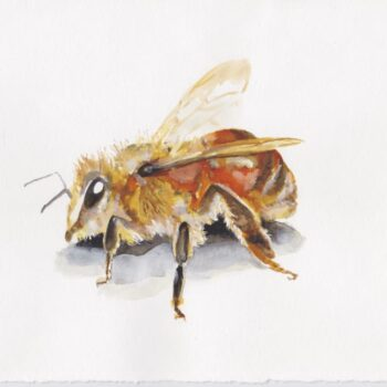 bee-watercolour-by-skye-oshea
