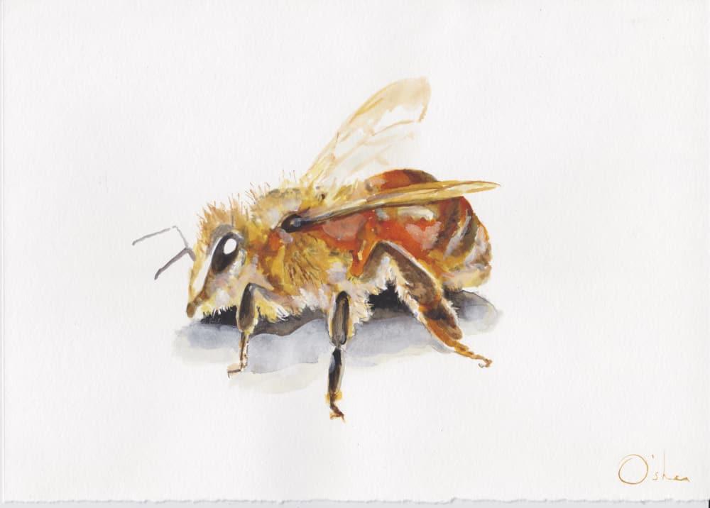 Bee Watercolour By Skye O'Shea