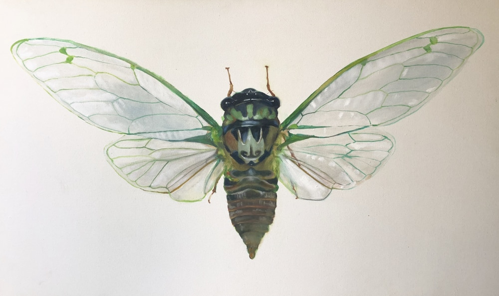 cicada-by-skye-oshea