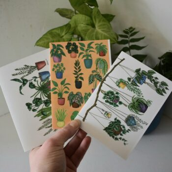 potted-plants-variety-greeting-cards-three-pack-cards-sarah-sheldon-art-by-a-vibrant-nest-by-avibrantnest