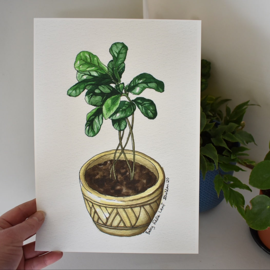 'Baby Fiddle Leaf Fig' A4 Art Print Botanical Collection Sarah Sheldon Art By A Vibrant Nest