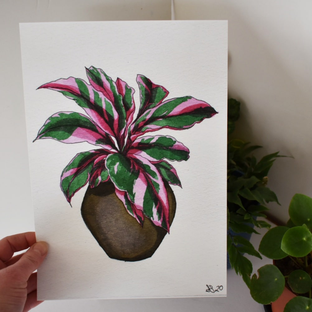 'Pink Calathea' A4 Art Print Botanical Collection Sarah Sheldon Art By A Vibrant Nest