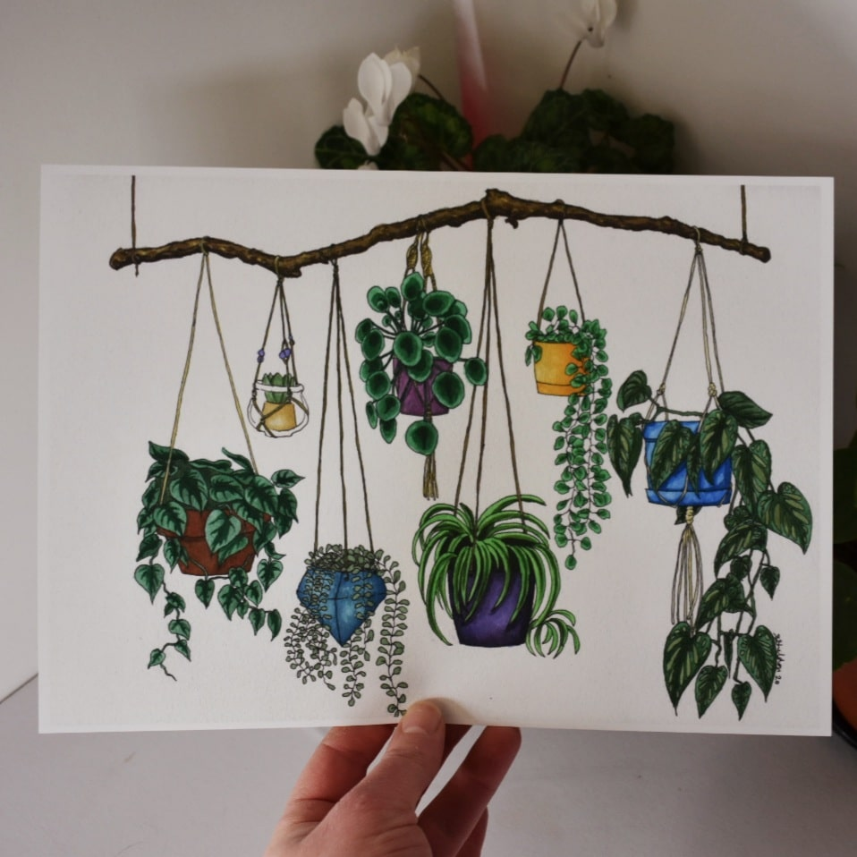 'Hanging Plants' A4 Art Print Botanical Collection Sarah Sheldon Art By A Vibrant Nest