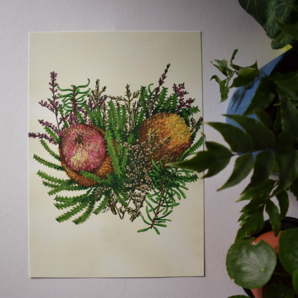 'Banksia 2' A4 Art Print Botanical Collection Sarah Sheldon Art By A Vibrant Nest