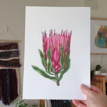 pink-protea-a4-art-print-botanical-collection-sarah-sheldon-art-by-a-vibrant-nest-by-avibrantnest