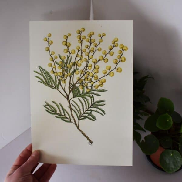 wattle-1-a4-art-print-botanical-collection-sarah-sheldon-art-by-a-vibrant-nest-by-avibrantnest