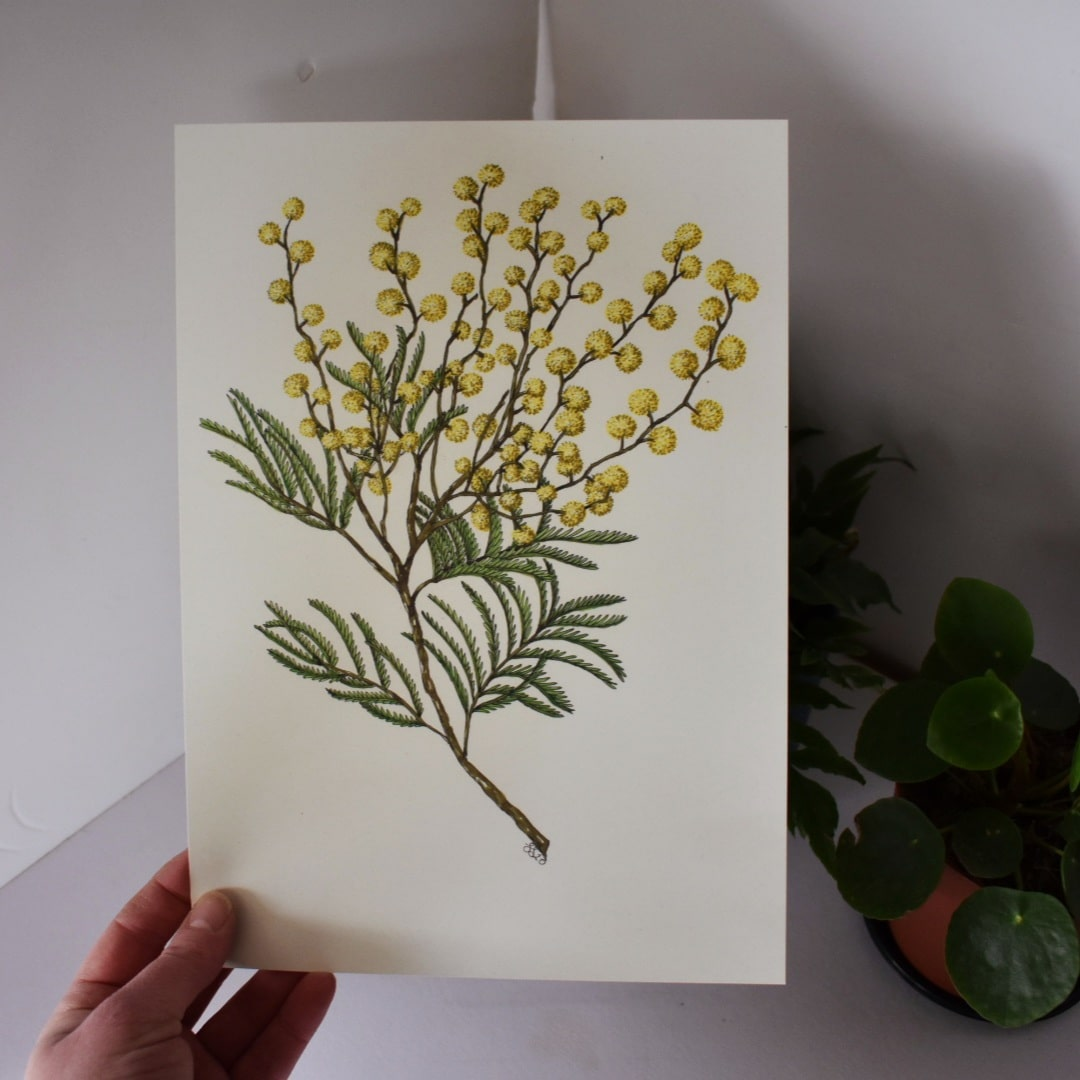 'Wattle 1' A4 Art Print Botanical Collection Sarah Sheldon Art By A Vibrant Nest