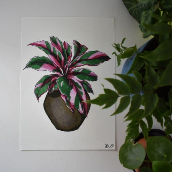 pink-calathea-art-print-botanical-collection-sarah-sheldon-art-by-a-vibrant-nest-by-avibrantnest
