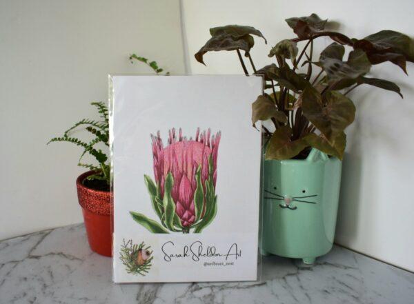 pink-protea-art-prints-botanical-collection-sarah-sheldon-art-by-a-vibrant-nest-by-avibrantnest
