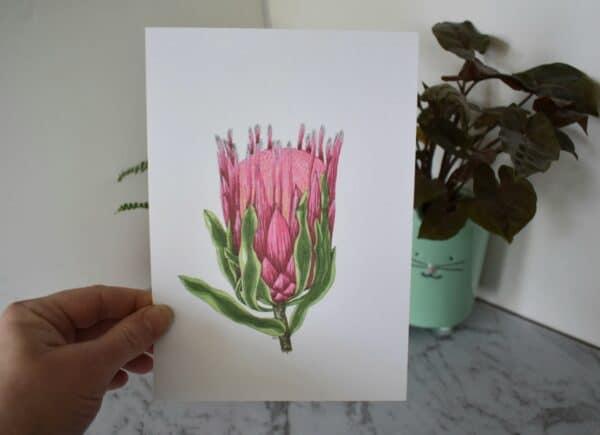 pink-protea-botanical-collection-art-print-sarah-sheldon-art-by-a-vibrant-nest-by-avibrantnest