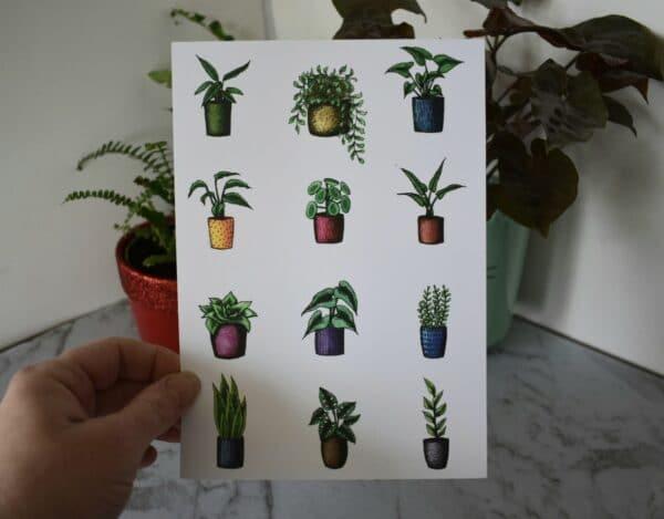 variety-potted-plants-botanical-collection-art-prints-sarah-sheldon-art-by-a-vibrant-nest-by-avibrantnest