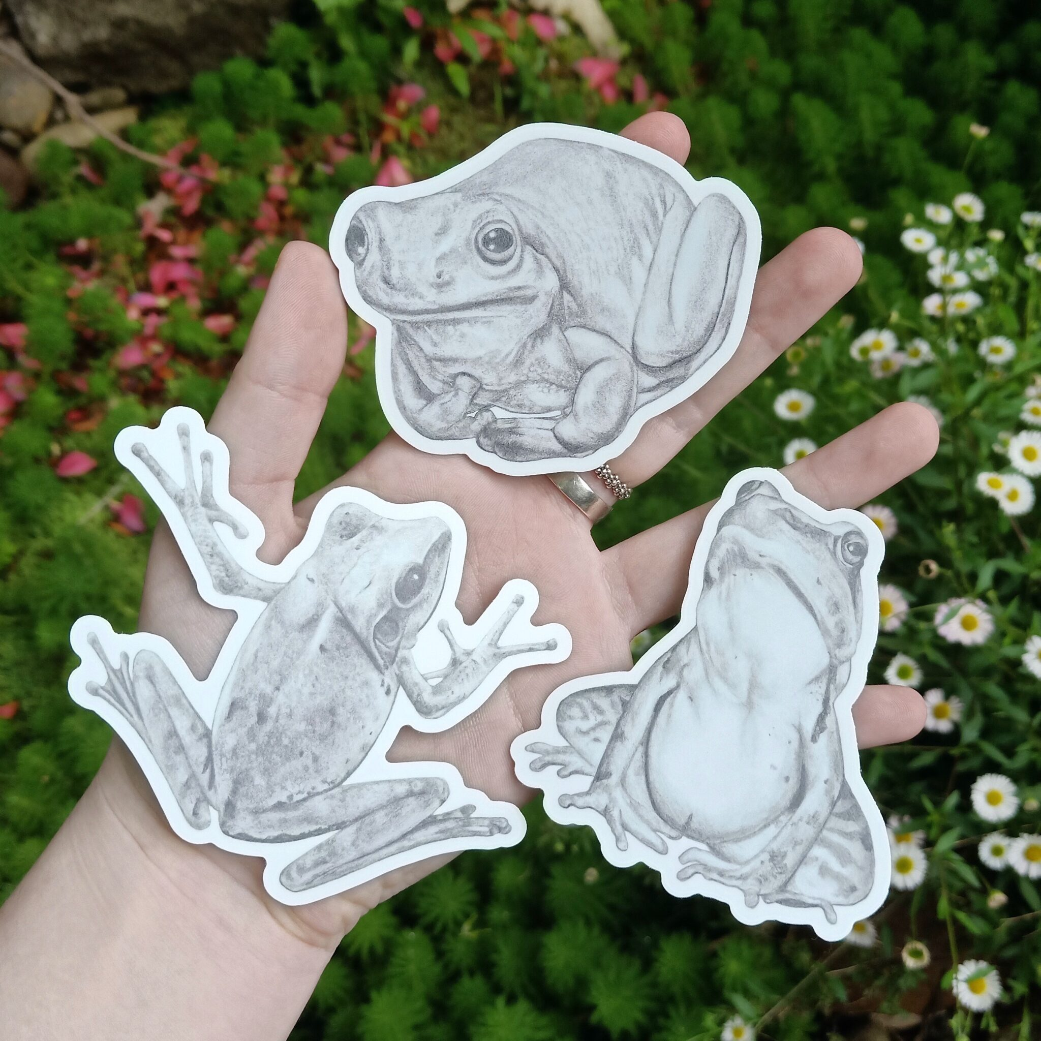 Bundle Of Frogs (Black And White) Vinyl Stickers By Rebecca Pidgeon