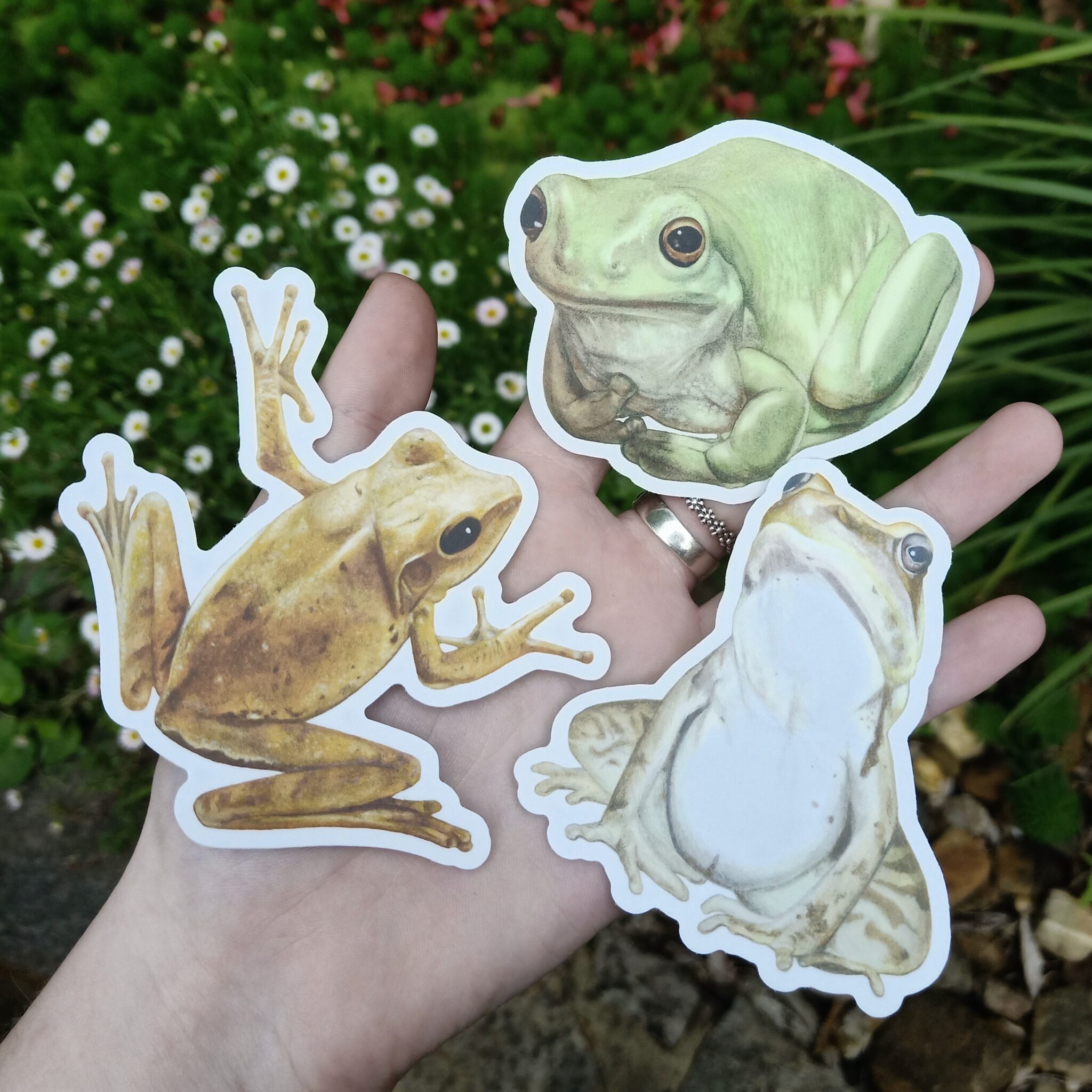 Bundle Of Frogs (Colour) Vinyl Stickers By Rebecca Pidgeon