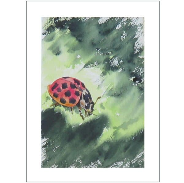lilleth-ladybird-watercolour-painting-a-limited-edition-giclee-print-by-artist-carin-lavery-by-Carin Lavery