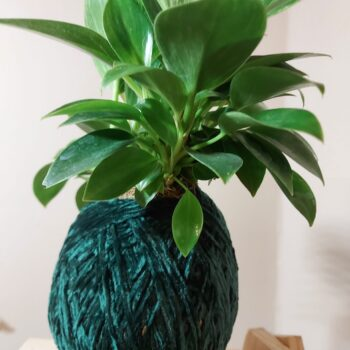 philodendron-birkin-kokedama-by-ife-products-and-community IFEPC 824312