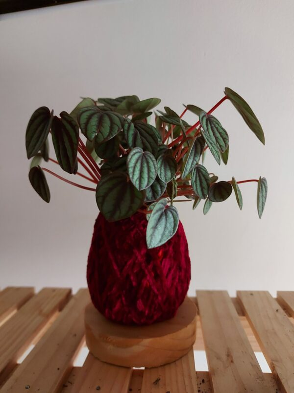 peperomia-brasilia-kokedama-by-ife-products-and-community-by-IFEPC