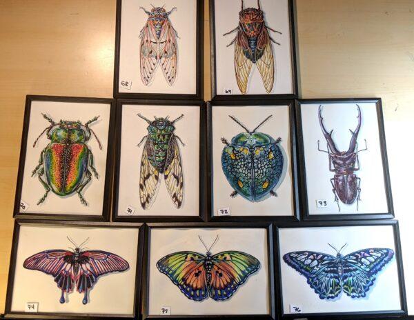 Insects9 martha iserman