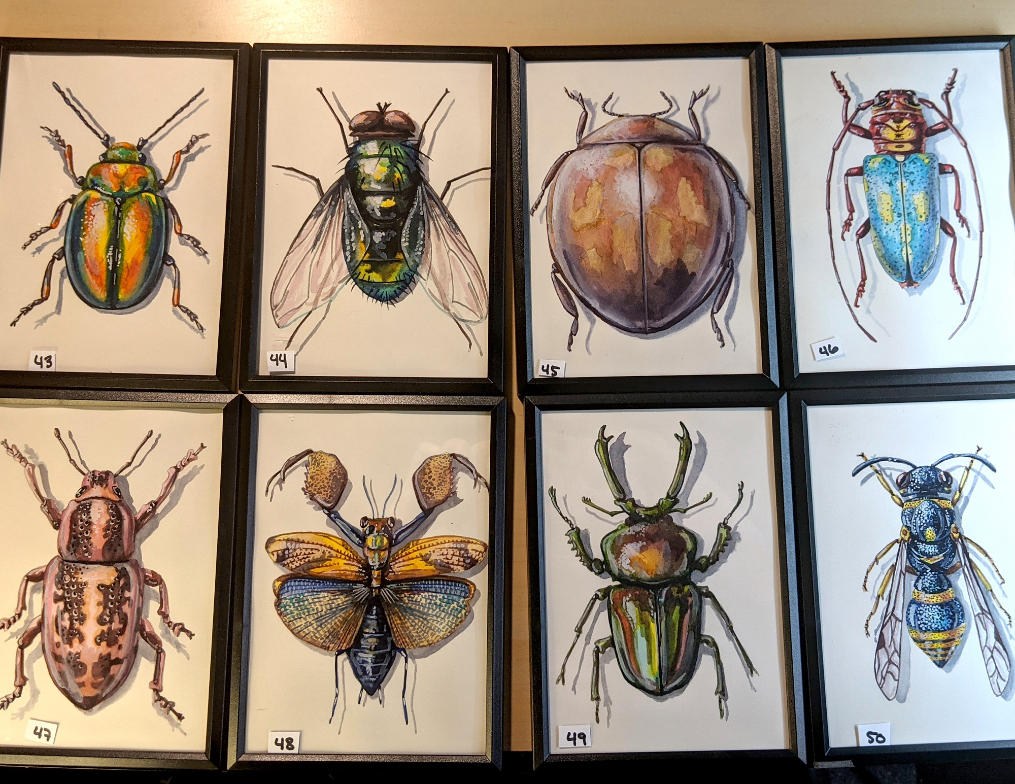 Small Insects 43 – 50 By Martha Iserman (Petals And Wings Exhibition)