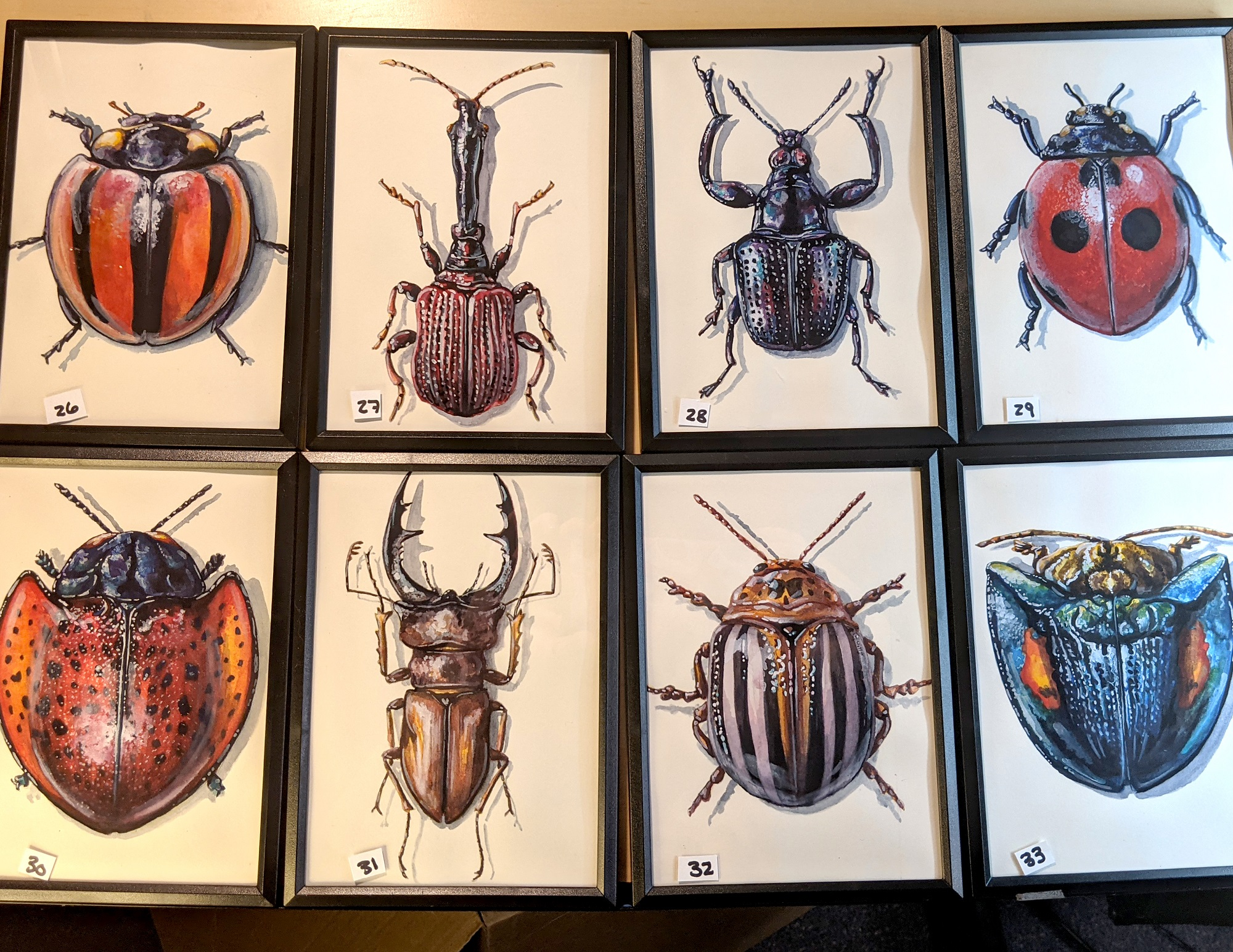 Small Insects 26 – 33 By Martha Iserman (Petals And Wings Exhibition)