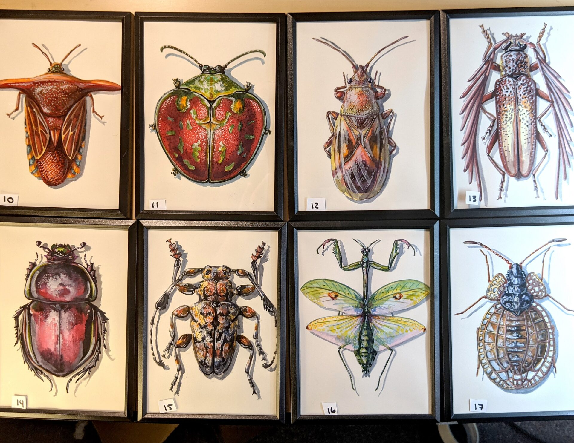 Small Insects 10 – 17 By Martha Iserman (Petals And Wings Exhibition)