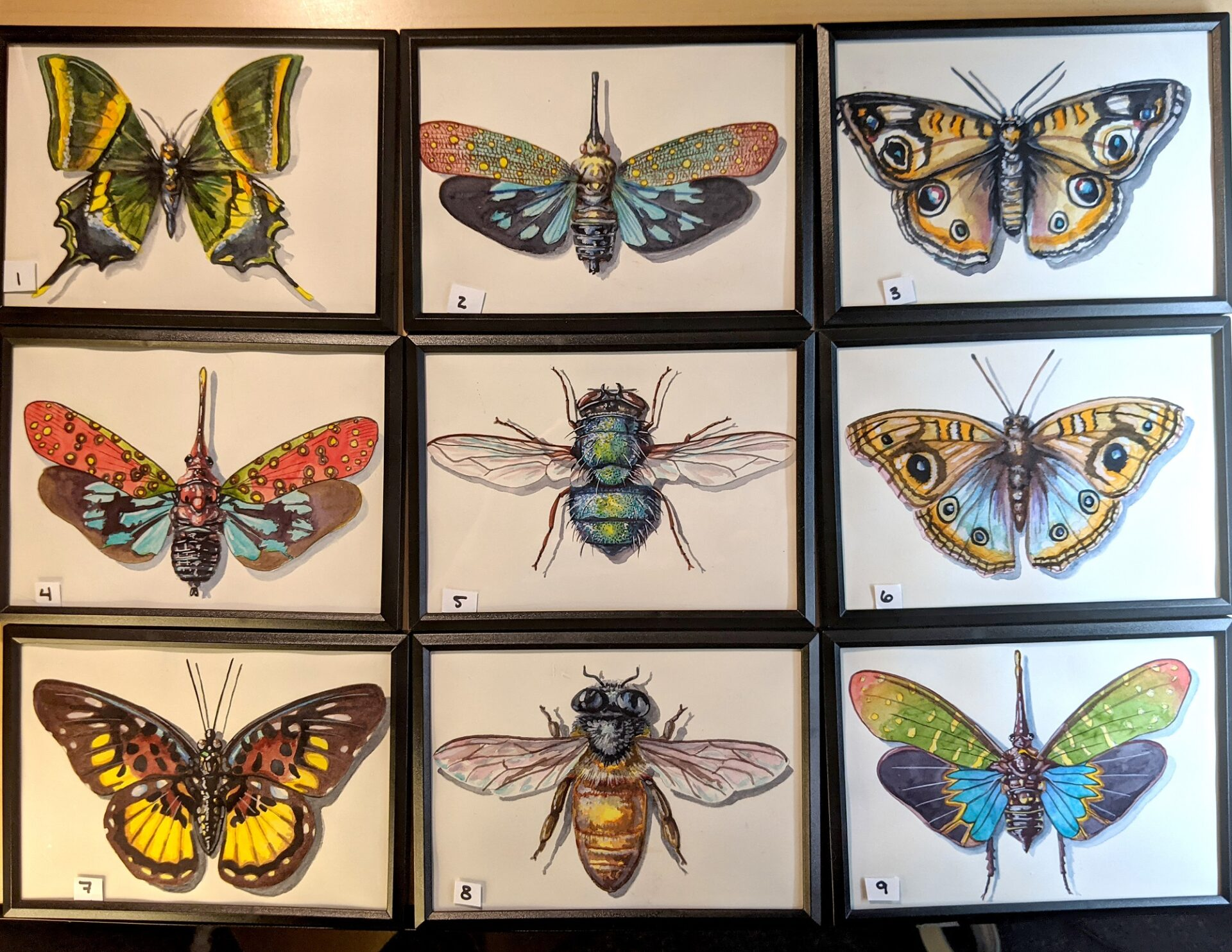 Small Insects 1 – 9 By Martha Iserman (Petals And Wings Exhibition)