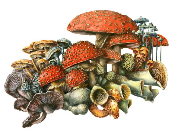 Mushrooms martha iserman