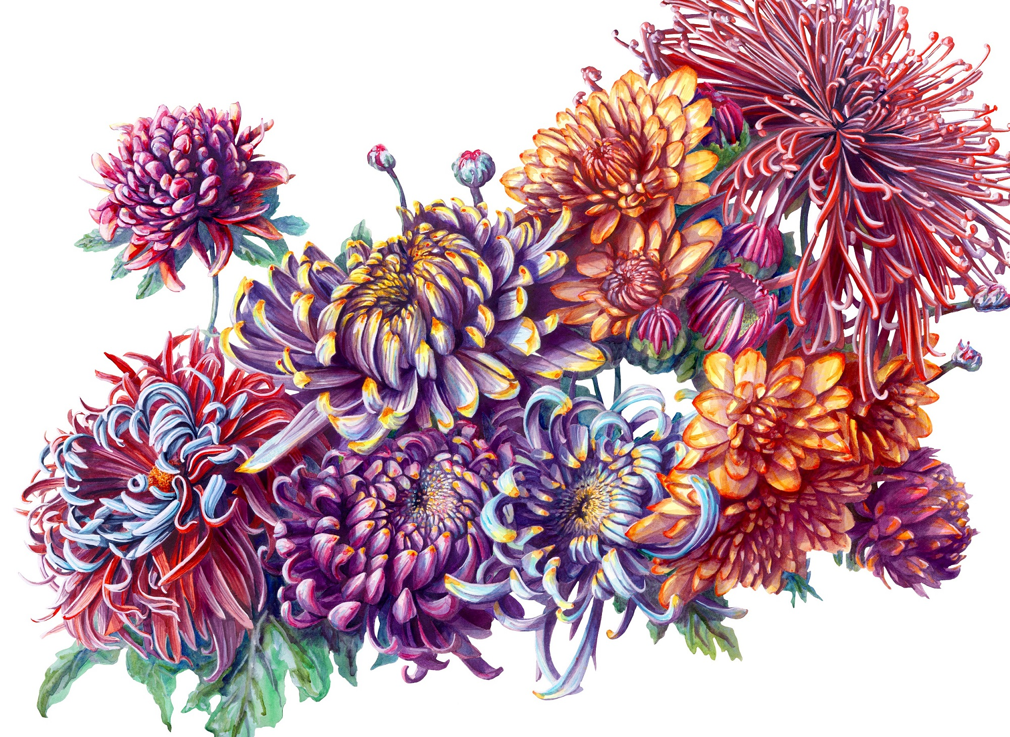 Chrysanthemums martha iserman