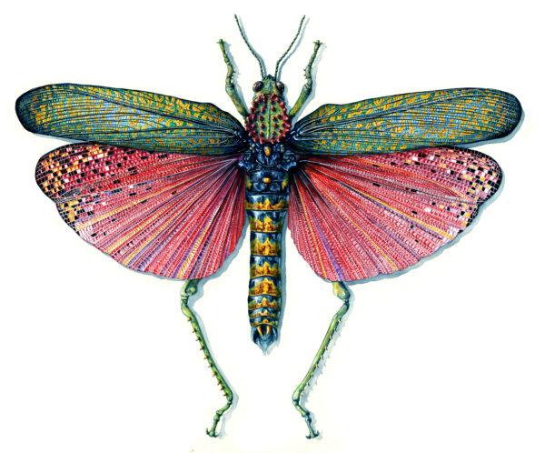 Red-Locust martha iserman