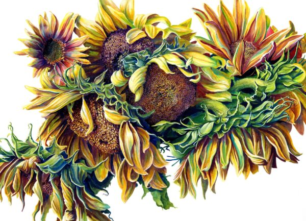 sunflowers martha iserman