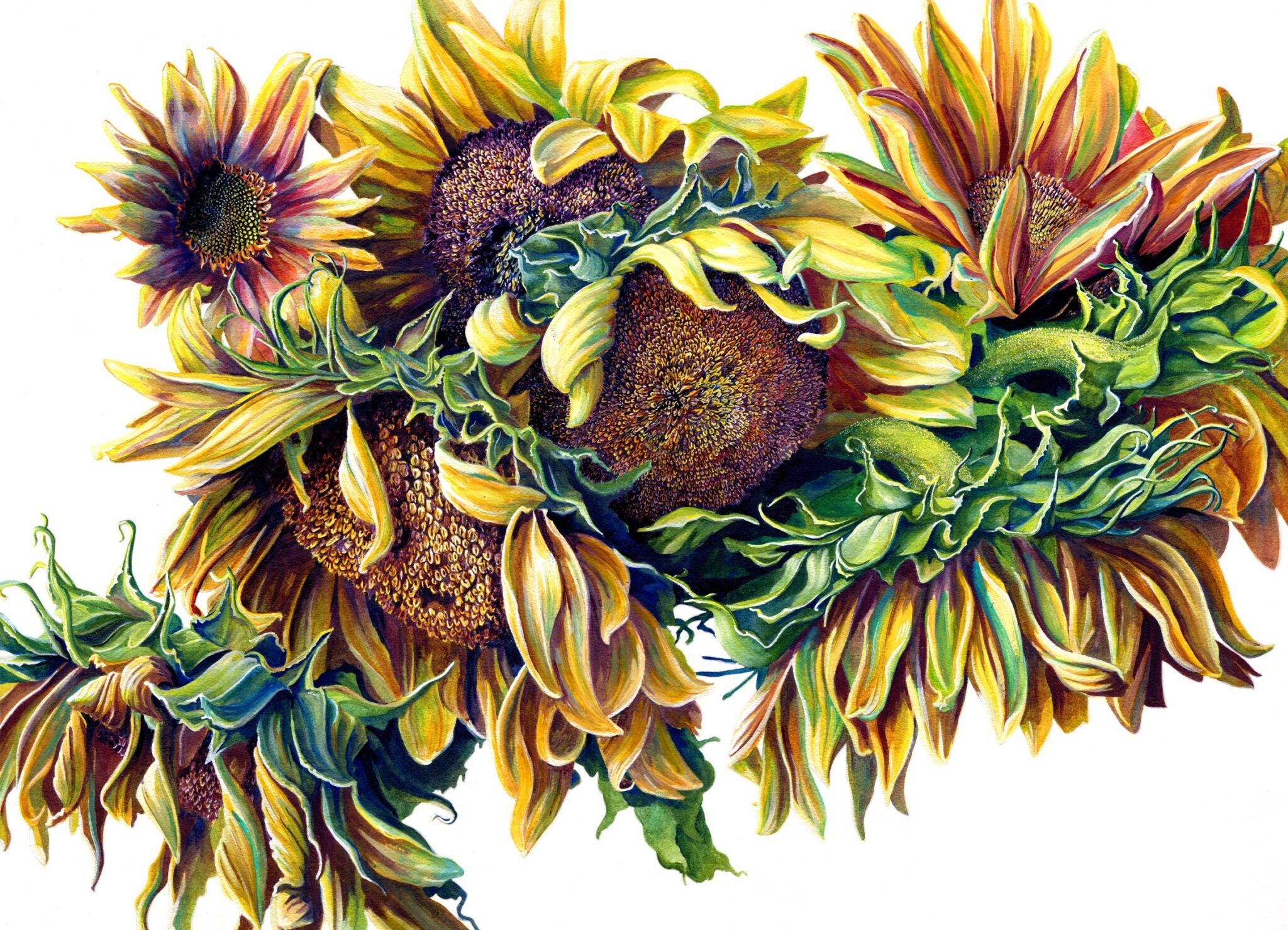 Sunflowers By Martha Iserman (Petals And Wings Exhibition)