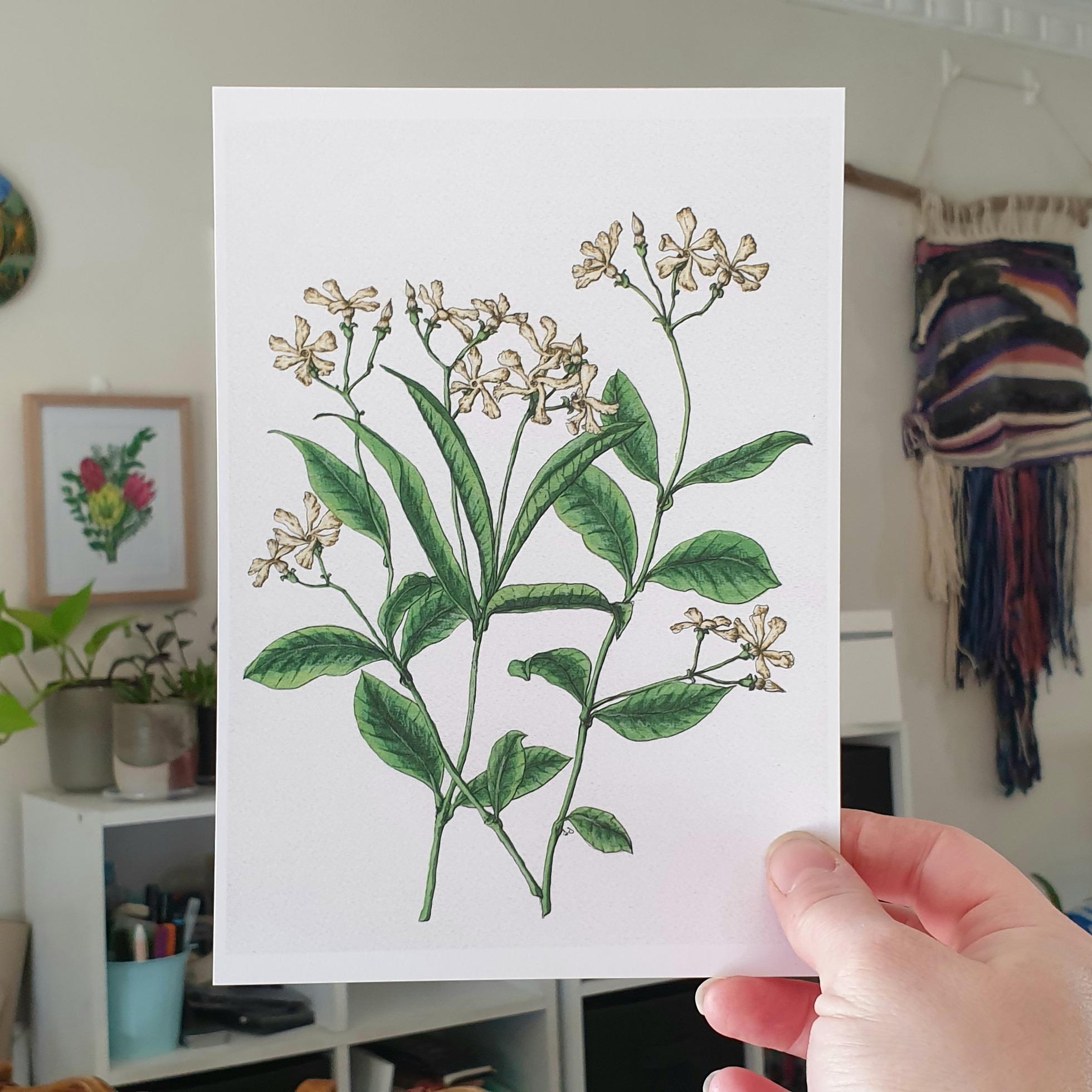 'Jasmine Flower' A4 Art Print Botanical Collection Sarah Sheldon By A Vibrant Nest