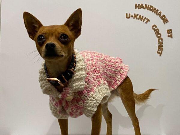 dog-sweater-handmade-by-u-knit-crochet-by-Ivy