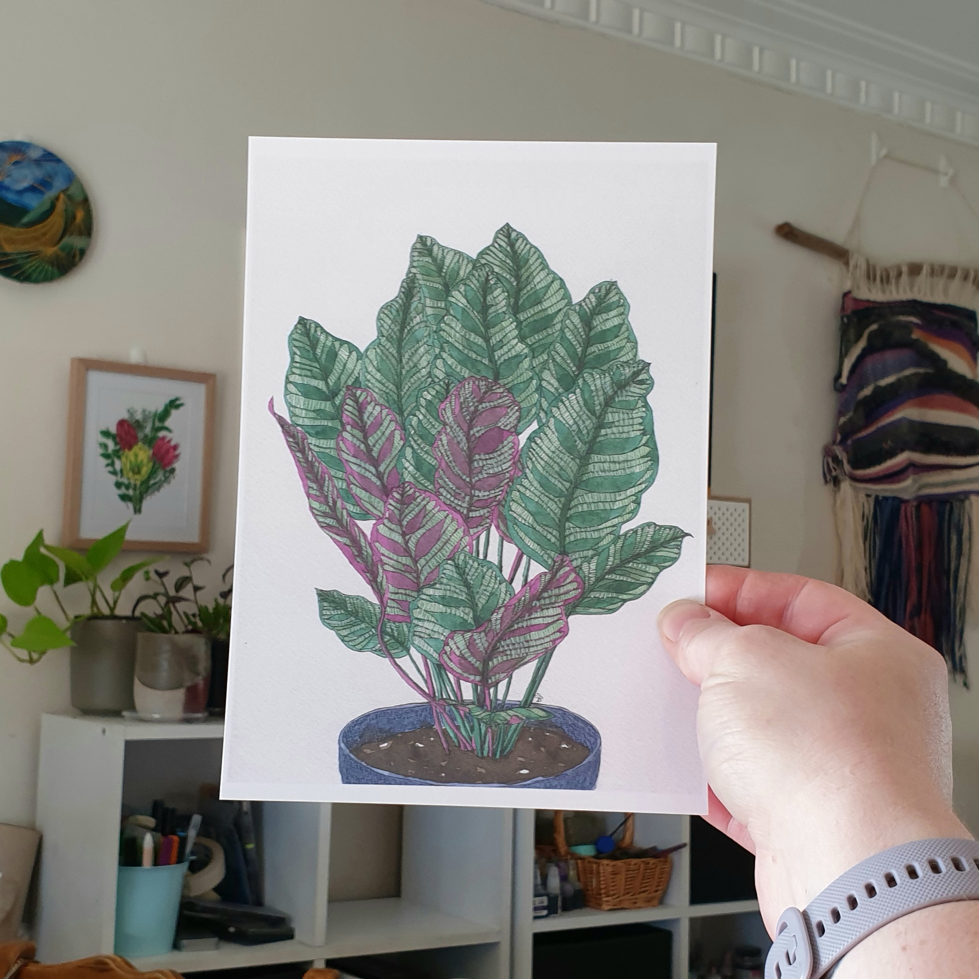 'Calathea Makoyana' A4 Art Print Botanical Collection Sarah Sheldon Art By A Vibrant Nest