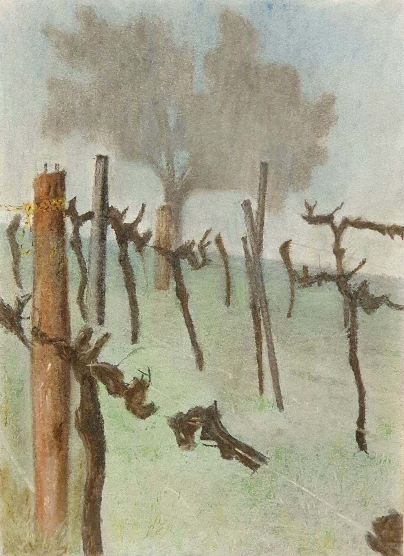 Oxley Vines At Dawn By Marcus De Luis Showing In Works On Paper